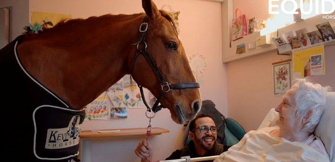 Peyo-cheval-vie